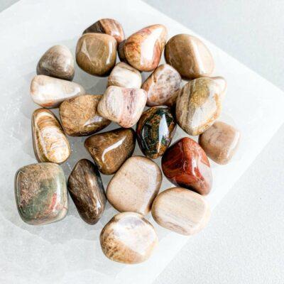 madeira fóssil surya cristais